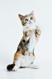 Jeu du chaton. Photo stock