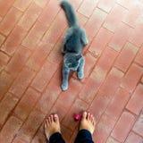 Jeu du crochet et de l'effort avec le chat image libre de droits