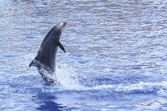 Jeu du dauphin Photographie stock