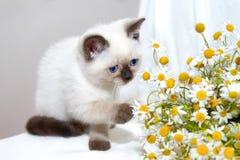 Jeu du petit chat Photos stock