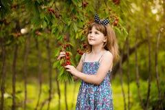 Jeu heureux de petite fille pr?s de cerisier dans le jardin d'?t? Cerise de cueillette d'enfant ? la ferme de fruit Cerises de s? photos libres de droits
