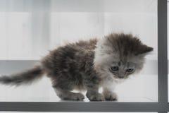 Jeu mignon de chaton Photo libre de droits