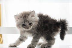 Jeu mignon de chaton Photos stock