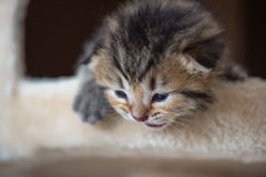 Jeu mignon de chaton Image stock