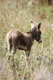 Jeune âne Photos libres de droits
