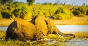 Jeune éléphant image libre de droits