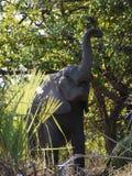 Jeune éléphant africain de buisson Photo libre de droits