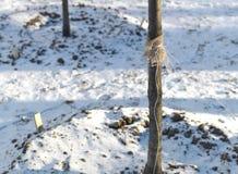 Jeune élevage d'arbre Images stock
