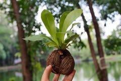 Jeune élevage d'arbres Photo stock