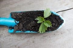 Jeune élevage de plante Photos libres de droits