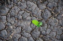 Jeune élevage de plante verte Photos libres de droits