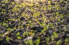 Jeune élevage de pousse de jeune plante Images stock
