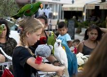Jeune adolescente de touristes avec des perroquets sur principal et les épaules PO images libres de droits