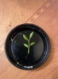 Jeune arbre à l'intérieur Images stock