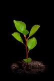 Jeune arbre Photographie stock