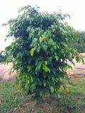 Jeune arbre Photo stock
