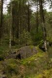 Jeune arbre dans la forêt Photos libres de droits