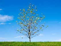 Jeune arbre dans le printemps Image stock