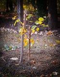 Jeune arbre récent planté image stock
