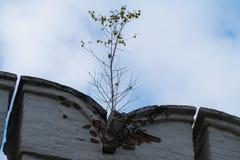 Jeune arbre s'élevant hors du mur de briques Photo stock