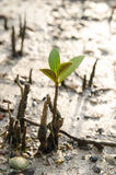 Jeune élevage d'arbre Photo libre de droits