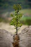 Jeune arbre sur la roche photographie stock