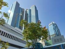 Jeune arbre vert dans la jungle de ville Photo stock