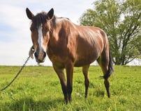 Jeune beau et fier cheval Photographie stock