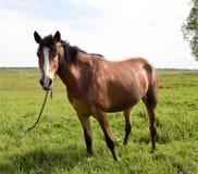 Jeune beau et fier cheval Photo libre de droits