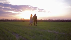 Jeune beaux homme et femme de couples marchant sur le champ vert au coucher du soleil contre le ciel allumé rose banque de vidéos