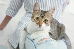 Jeune belle femme avec le chat photographie stock libre de droits
