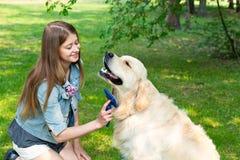 Jeune belle femme peignant le chien de golden retriever de fourrure sur une pelouse verte Photographie stock libre de droits