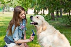 Jeune belle femme peignant le chien de golden retriever de fourrure sur une pelouse verte Photographie stock