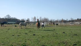 Jeune belle fille courant avec son cheval 60fps 4K banque de vidéos