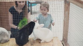 Jeune belle mère avec peu de fille regardant des lapins dans la cage, les alimentant clips vidéos