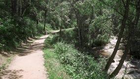 Jeune belle mère avec un petit enfant marchant le long des arbres dans la forêt, près de la rivière banque de vidéos