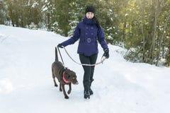 Jeune belle marche femelle avec le chien de Labrador Photos stock