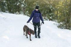 Jeune belle marche femelle avec le chien de Labrador Photographie stock