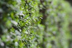 Jeune bourgeon poussant  images stock