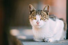 Jeune Cat Resting In Shade On drôle par jour d'été chaud dehors Photos stock
