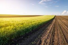 Jeune champ de bl? dans le jour ensoleill? image libre de droits