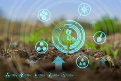 Jeune champ de maïs vert dans le jardin agricole images libres de droits