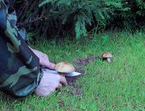 Jeune champignon de boletus Images stock