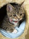 Jeune chat Photos libres de droits