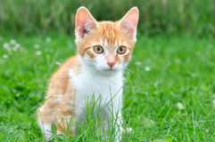 Jeune chat images stock