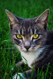 Jeune chat Photo stock