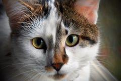 Jeune chat Images libres de droits