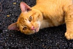 Jeune chat blanc Image libre de droits