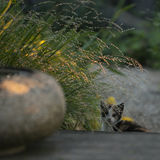 Jeune chat dans l'eau potable de jardin d'une pierre Image stock