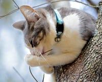 Jeune chat dans un arbre Images stock